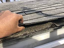 Tips How to Remove Mold from Your Roof